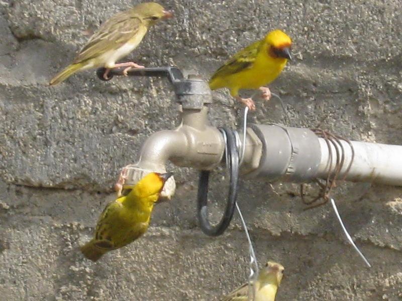 (عدستي الخاصة) الطيور 4KW22995.jpg
