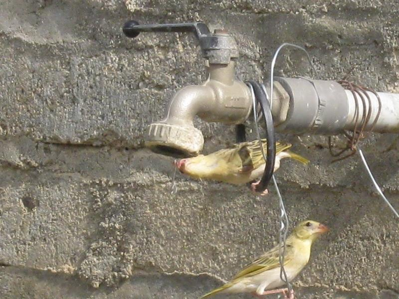 (عدستي الخاصة) الطيور 4r122996.jpg