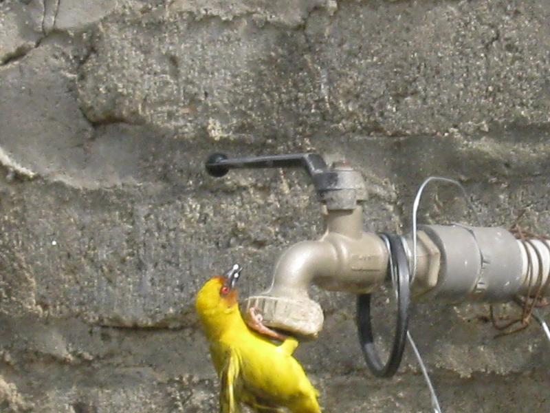 (عدستي الخاصة) الطيور 8ag21463.jpg