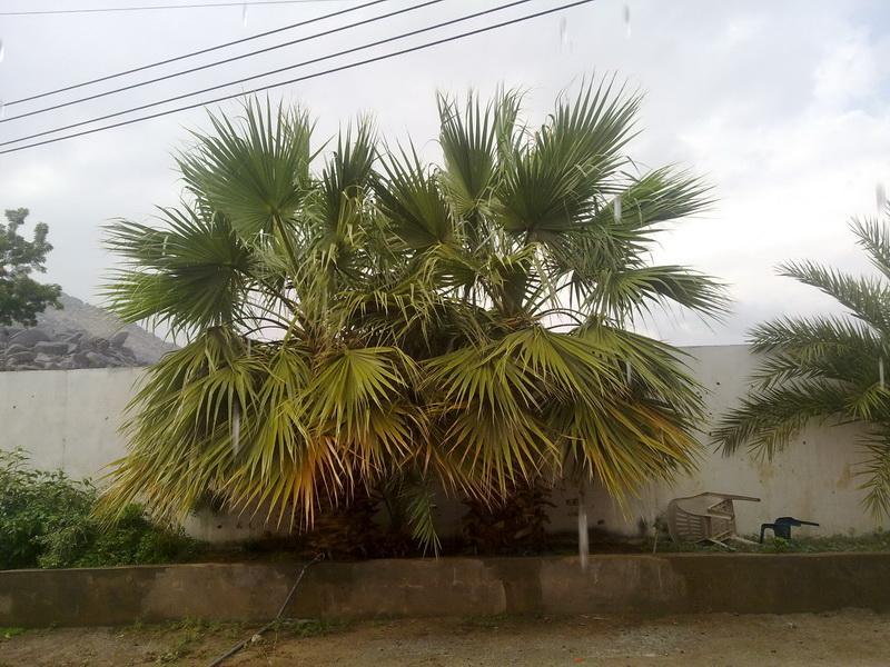 أمطار الفائجة الأحد 1432/2/5هـ AiB88579.jpg