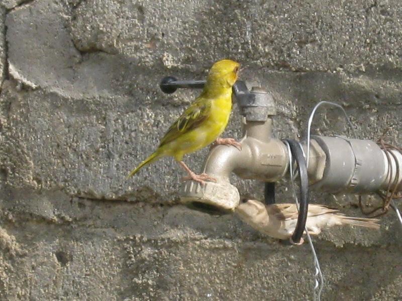 (عدستي الخاصة) الطيور GoO21889.jpg