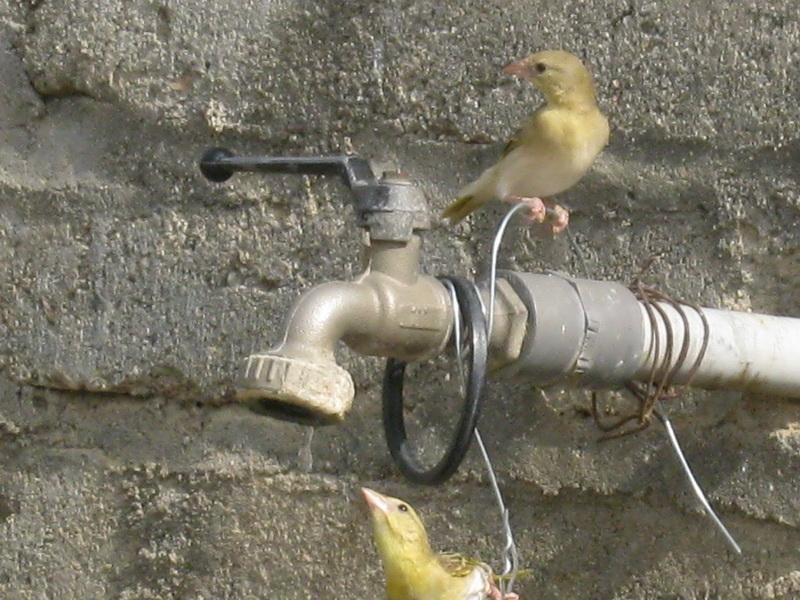 (عدستي الخاصة) الطيور LBx22400.jpg