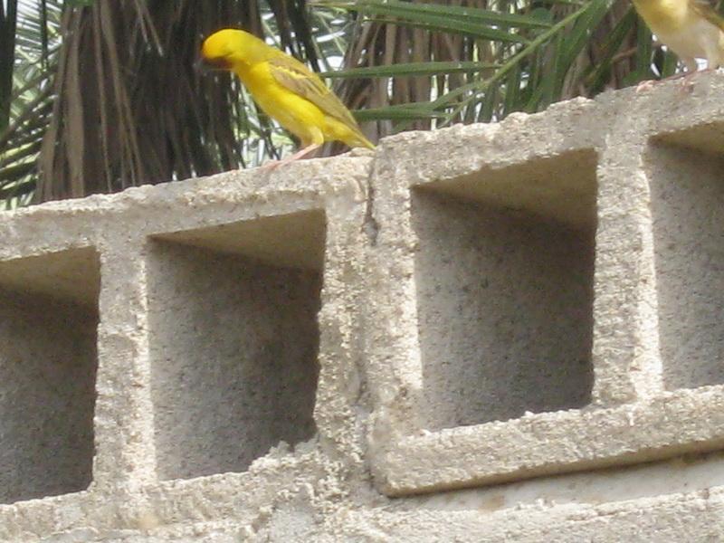 (عدستي الخاصة) الطيور Rjy22995.jpg