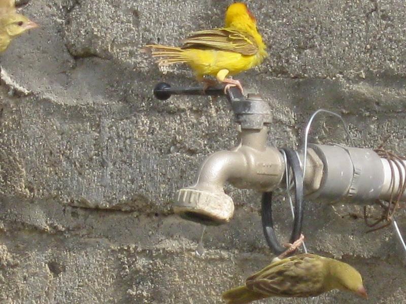 (عدستي الخاصة) الطيور UK922995.jpg
