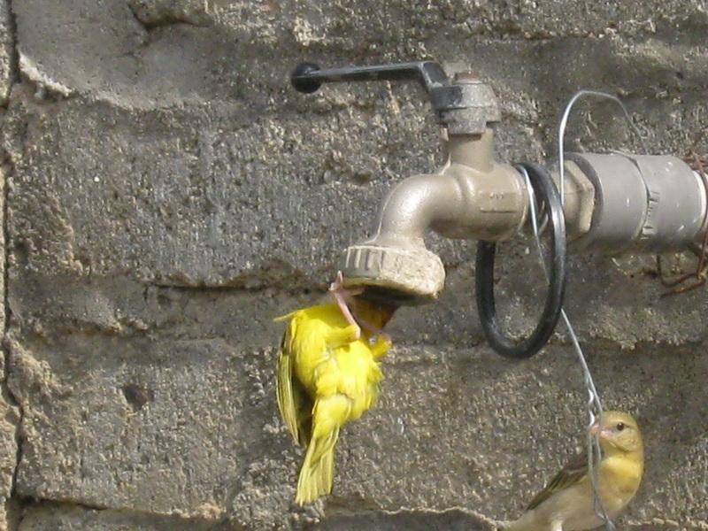 (عدستي الخاصة) الطيور VjB21463.jpg