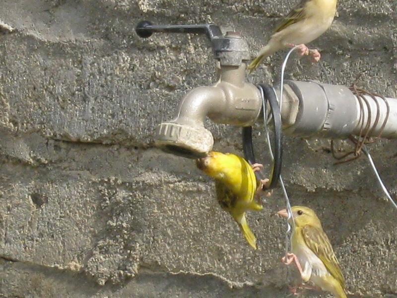 (عدستي الخاصة) الطيور ZqI21889.jpg