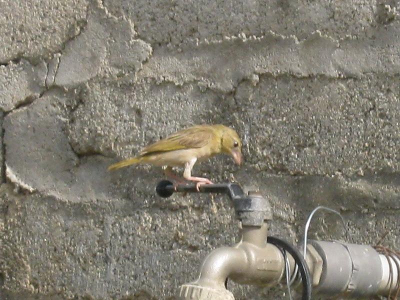 (عدستي الخاصة) الطيور aJT22995.jpg