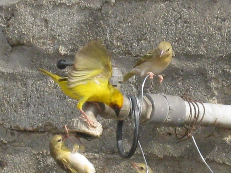 (عدستي الخاصة) الطيور iM722995.jpg