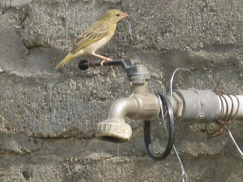 (عدستي الخاصة) الطيور iVz21463.jpg