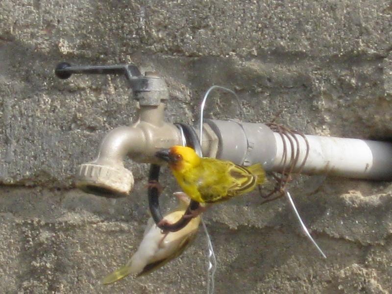 (عدستي الخاصة) الطيور m1A22995.jpg