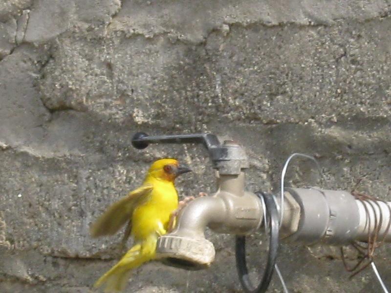 (عدستي الخاصة) الطيور xuY21463.jpg